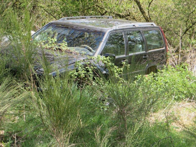 Ein Volvo-Kombi, ebenfalls einfach im Wald entsorgt