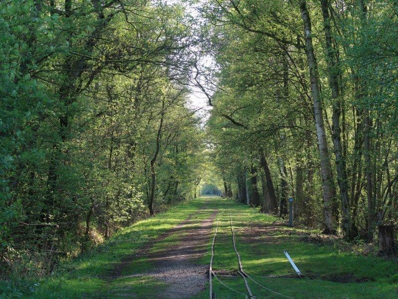 Schmale Schienen führen durch eine grüne Allee.