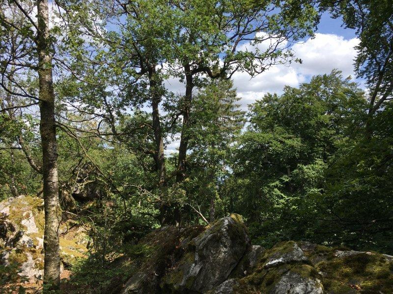 Verwilderte Landschaft, Kletterfelsen Licht und Schatten auf der Wildenburg