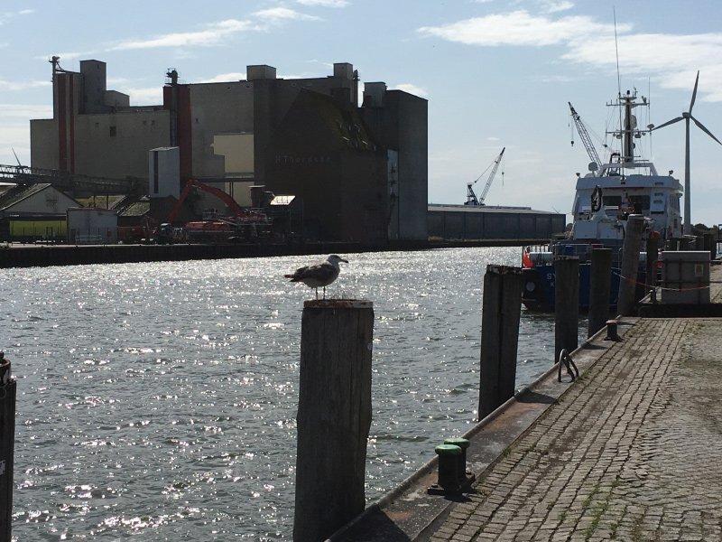 Blick über den Hafen, eine Möwe plustert sich auf, hier wirkt der Husum tatsächlich etwas grau
