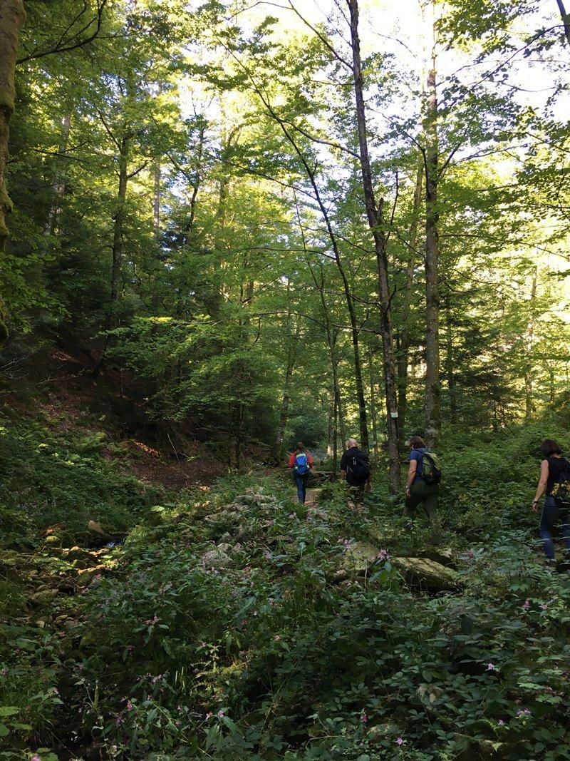 Unsere Wandergruppe folgt der Yogalehrerin auf dem schmalen Steig neben dem Bach