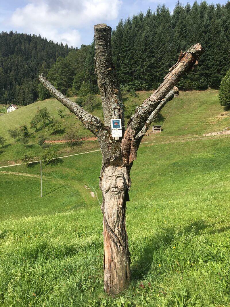 Baum ohne Laub aber mit Fratze, auch das begegnet dem Wanderer auf dem Schwarzwaldsteig