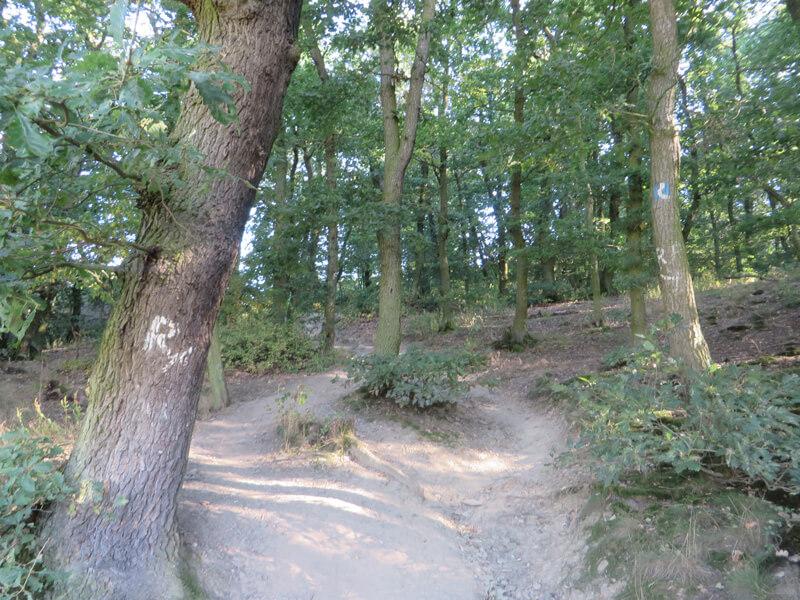 Ein kleiner Eichenwald, im Vordergrund ein paar Bäume, zwischen denen ein ausgetretener Pfad läuft. Hier verläuft die Rheinsteig-Etappe 15.