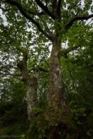 Bilde av et gammelt tre