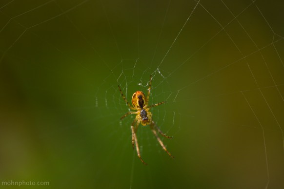 Photo of a spider in the centre of a web