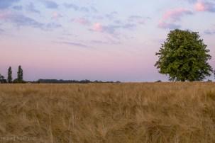 Tree In Right Corner