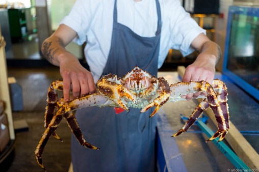 Gaute showcasing the live king crabs from the tank
