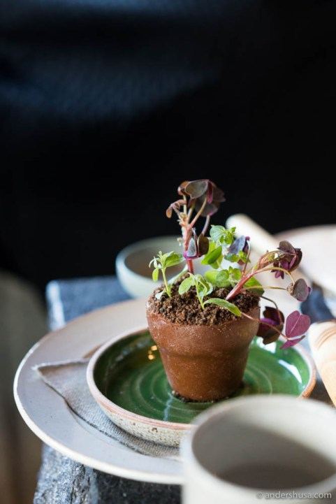 Rose terracotta: Potted plant cake