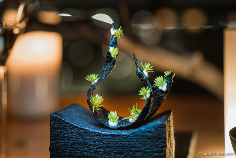Baby succulents and chicken dripping emulsion on a truffle seaweed chip.