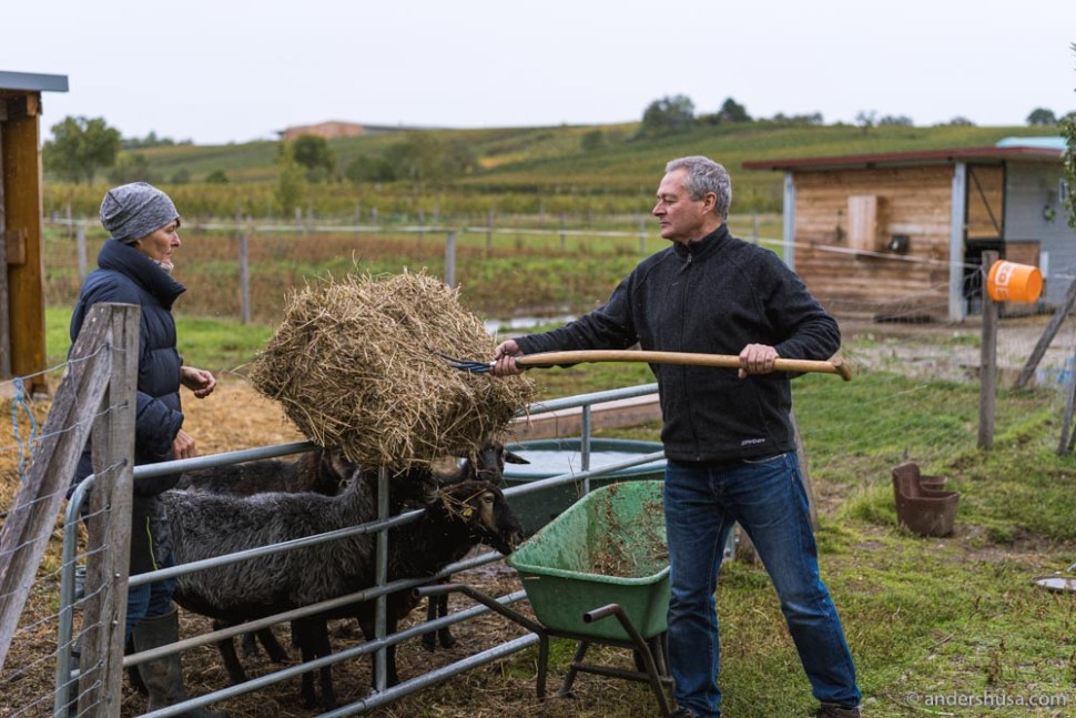 Gernot and Heike Heinrich have been working biodynamically since 2006.