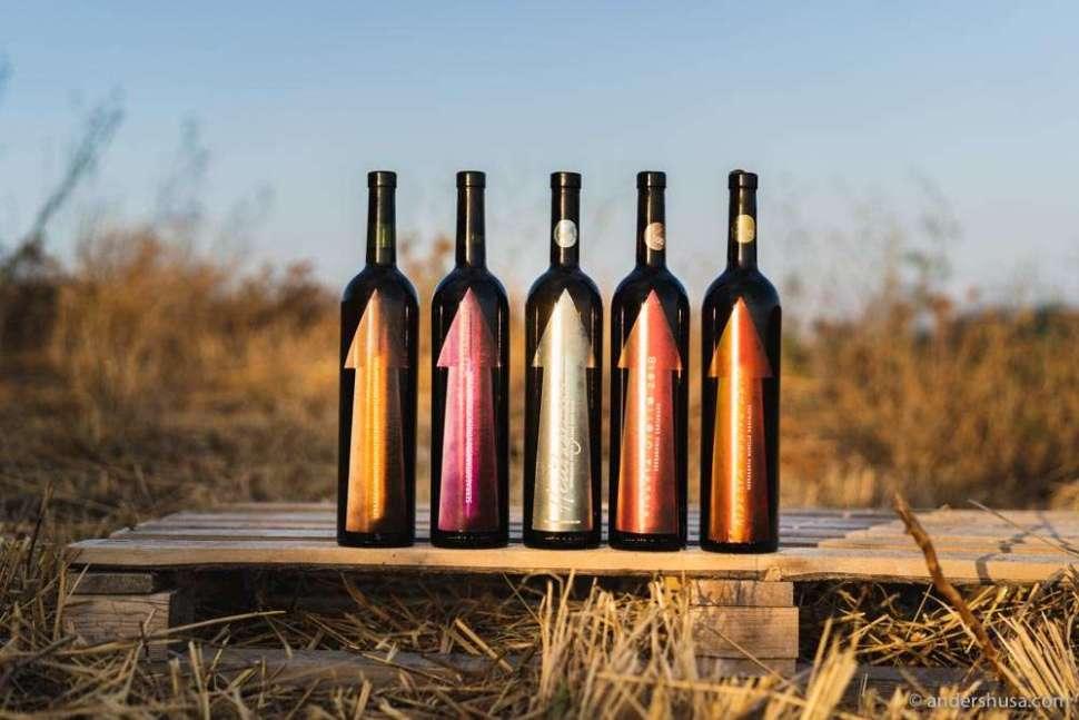 We traveled to the island of Pantelleria to visit Gabrio Bini's winery, Serragghia.