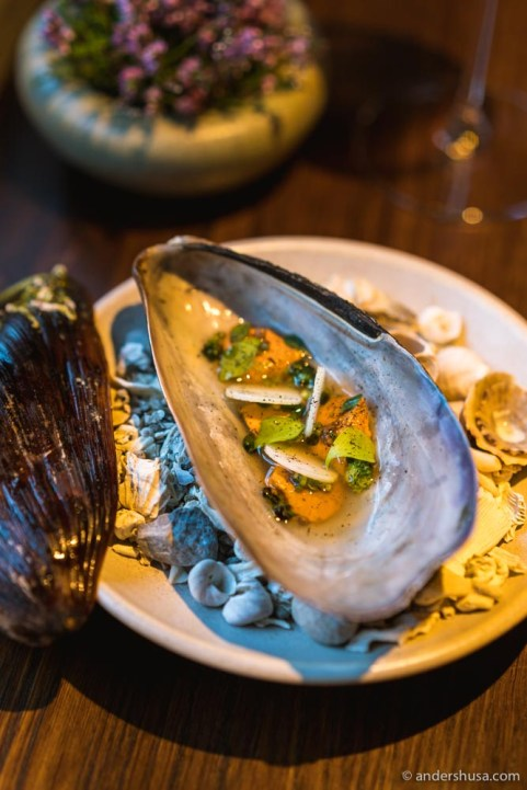 Horse mussel in its own shell.