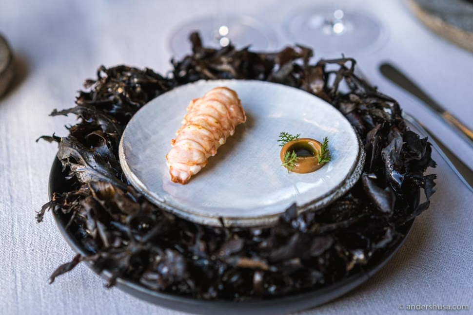 Langoustine with caramelized cream, juniper, dill oil, and yarrow.