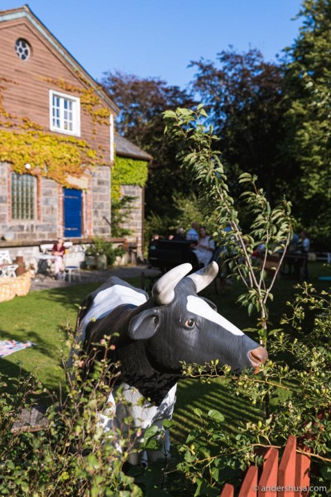 The cow welcomes you to the old dairy farm!