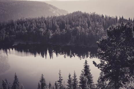 forest-lake