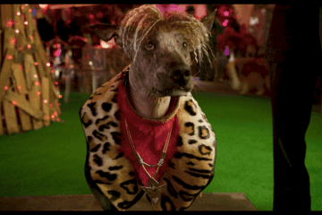 Take a first look at Stanley Tucci, Ludacris, Jordin Sparks, Gabriel Iglesias & Alan Cumming in SHOW DOGS 7