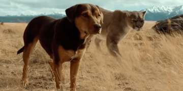 A DOG'S WAY HOME on Digital 3/26 and Blu-ray and DVD 4/9 38