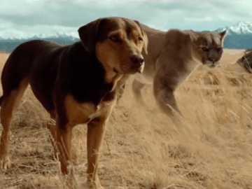 A Dog's Way Home (2019) 34