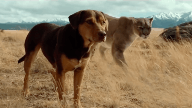 https://i1.wp.com/andersonvision.com/wp-content/uploads/2019/01/a-dogs-way-home-feat-e1547170520866.png?resize=640%2C360&ssl=1