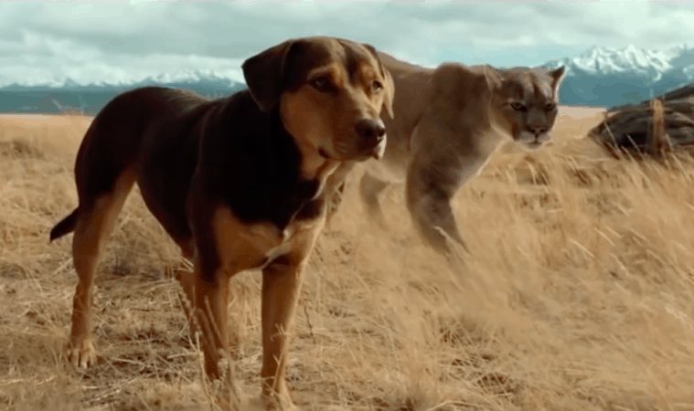 A DOG'S WAY HOME on Digital 3/26 and Blu-ray and DVD 4/9 3