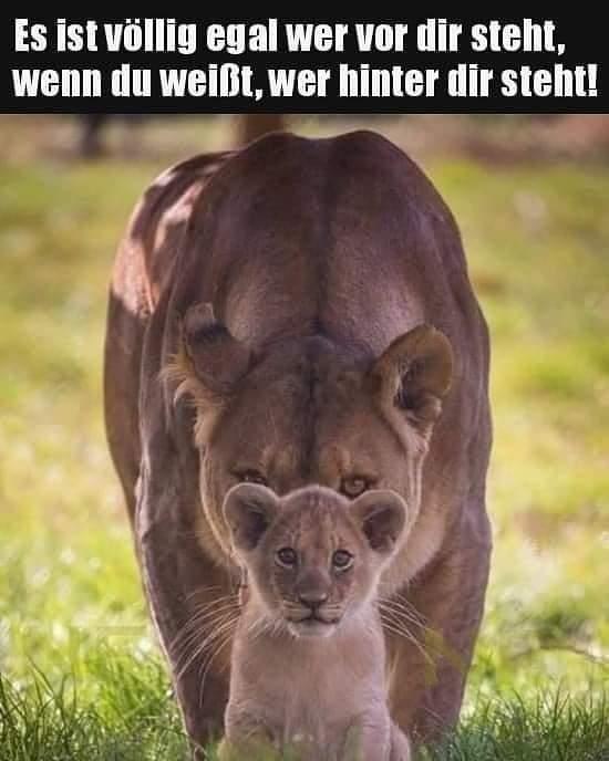 Löwin mit Löwenbaby