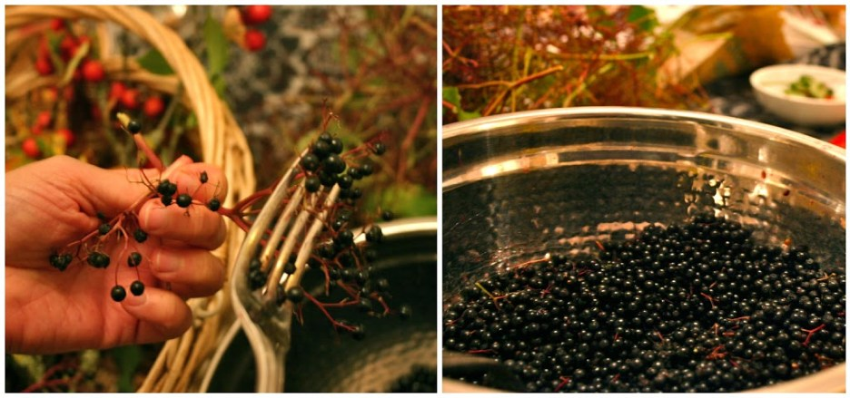 Making Elderberry Wine