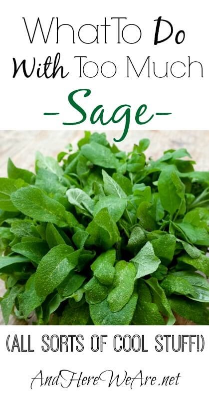 What To Do With Sage And Here We Are...