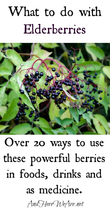 What to do with elderberries And Here We Are...