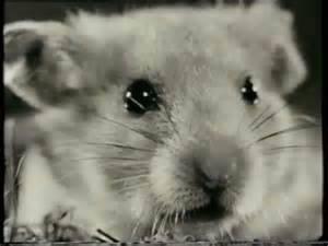 Marvin Hamster