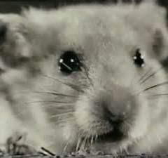 Marvin Hamster Music Emporium – MH253