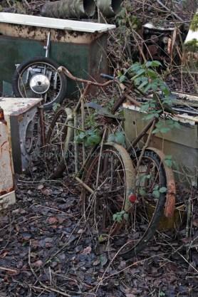 car-plantation56