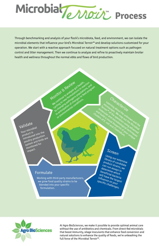 Microbial Terroir Process Infographic - Andiamo Creative
