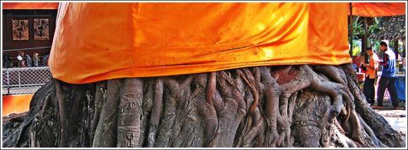 buddhatree