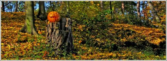 pumpkin_in_the_wood