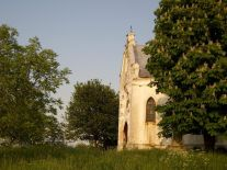 Viile Satu Mare | Foto: Kariklea David