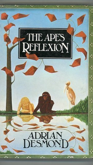 The Ape's Reflexion