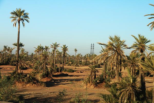 Palmeral Marrakech
