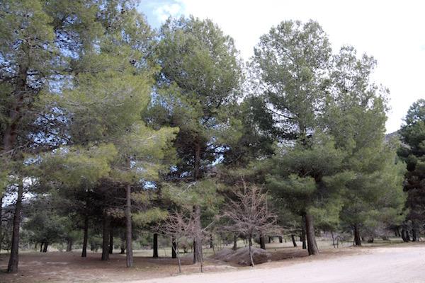 Área Recreativa Fuente Mahón La Parra