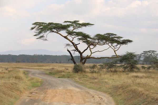 Paisaje Sabana Áfricana-Andorreando por el Mundo