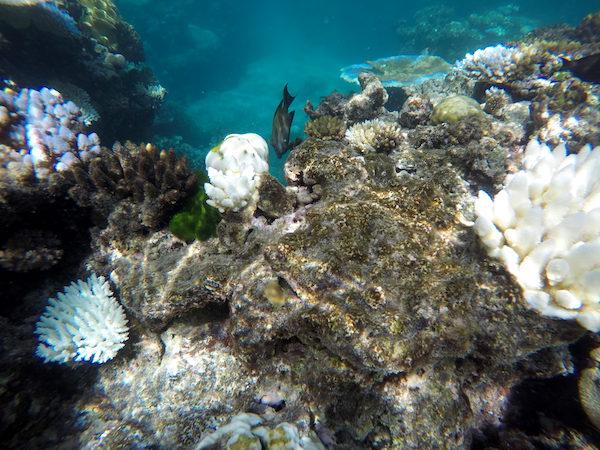 Gran Barrera Arrecifes-Andorreando por el Mundo