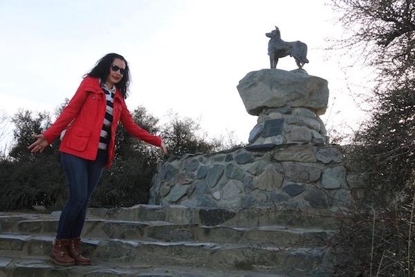 Perro Ovejero-Andorreando por el Mundo