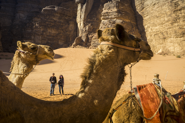 Camello Jordania