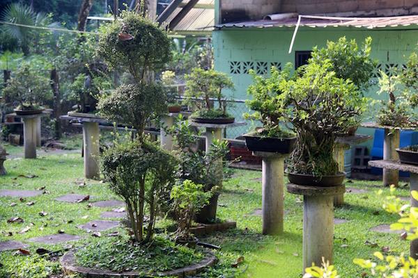 Vivero Nursery