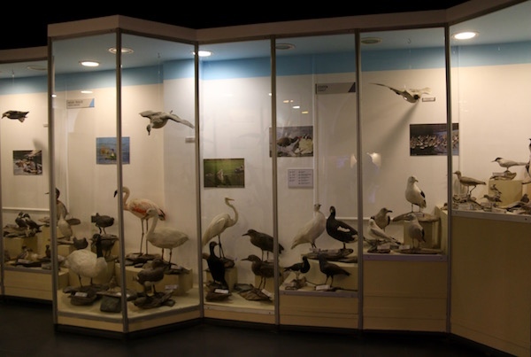 Sala Museo del Fin del Mundo
