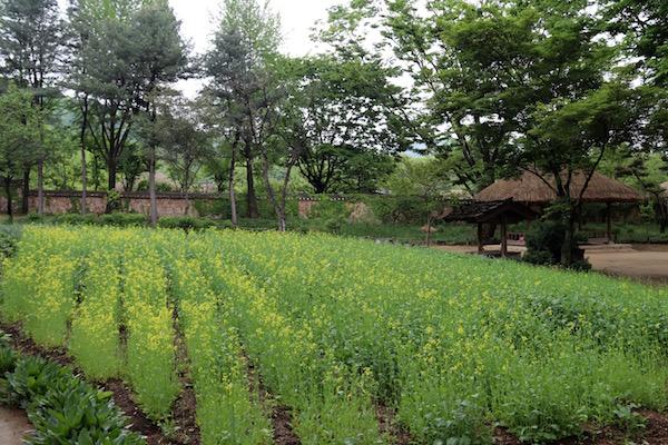 Cultivos poblado Joseon