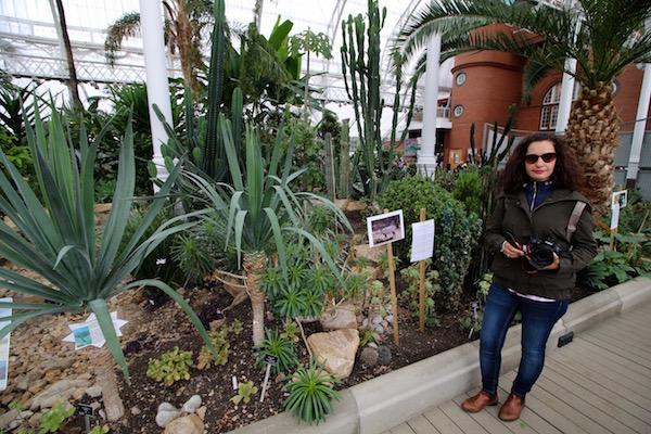 Invernadero Plantas