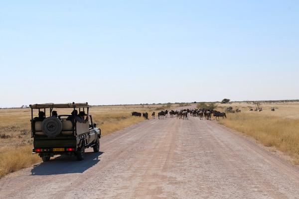 4x4 Parque Nacional Etosha