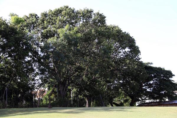 Parque Victoria