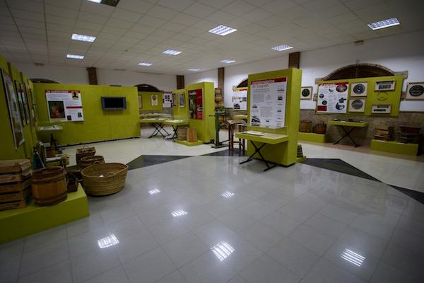 Exposición Museo Uva