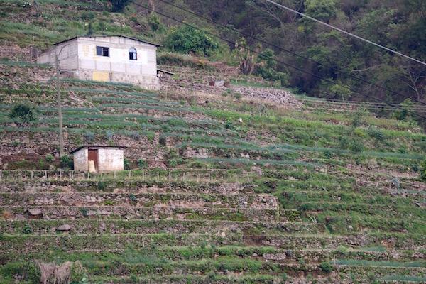 Practican la Agricultura en Terrazas, San Antonio de Palopó.